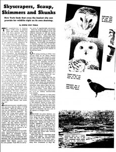 "Edwin Way Teale, ""Skyscrapers, Scaup, Skimmers and Skunks,"" New York Times, December 16, 1951, 189, accessed http://query.nytimes.com via subscription."